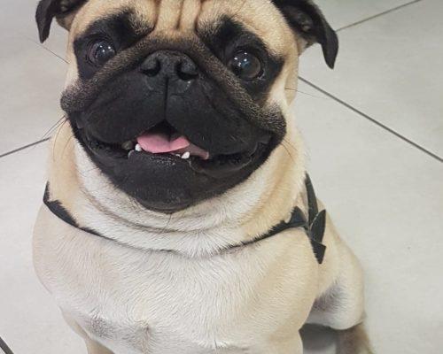 https://animalhome.pl/wp-content/uploads/2019/07/pies_animal_home_otwock_weterynarz_pacjent-500x400.jpg
